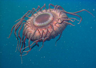 census-marine-life-deep-sea-jellyfish_24126_big.jpg